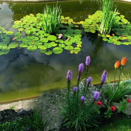 Elegant Water Garden