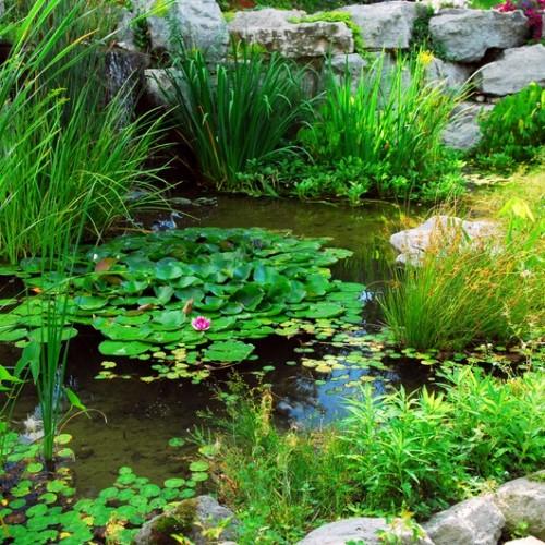 Natural-Look Water Garden