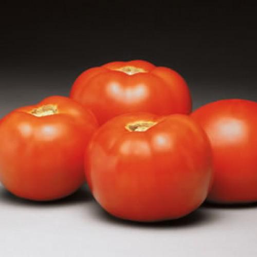 Tomato 'Better Bush'