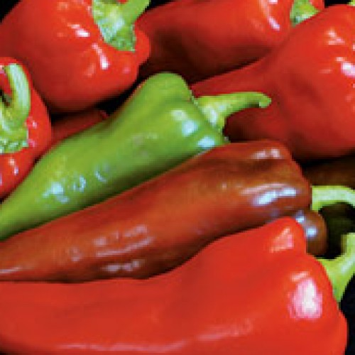 Pepper 'Carmen'