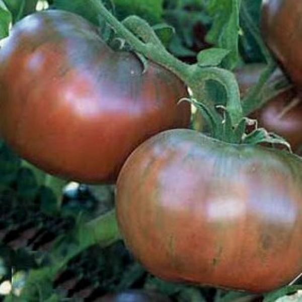 Tomato 'Cherokee Purple'