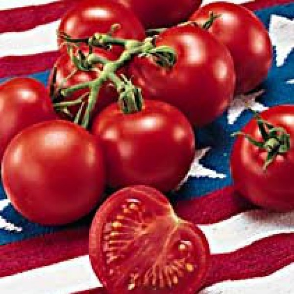 Tomato '4th of July'