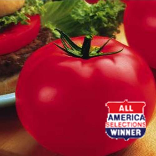 Tomato 'Big Beef'