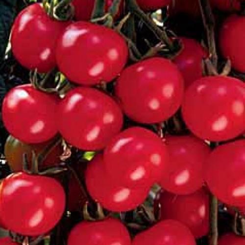Tomato 'Sweet Million'