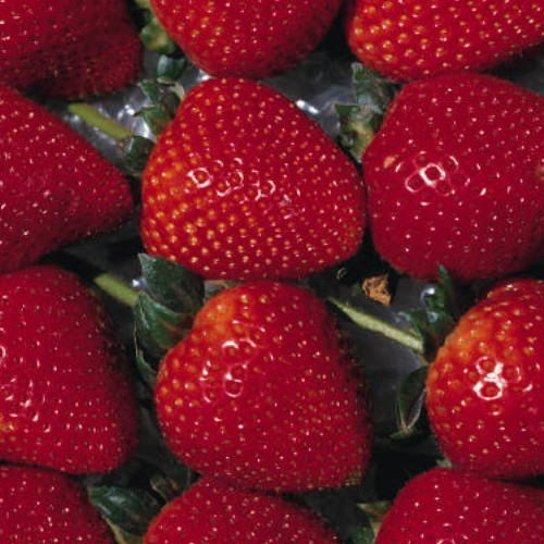 Strawberries and Small Fruits