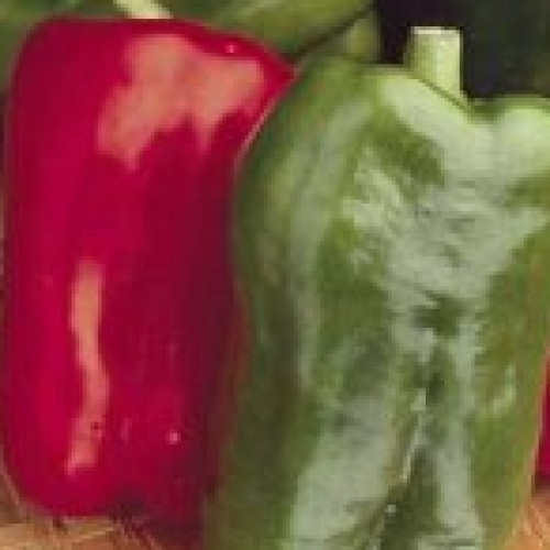 Pepper 'Big Bertha'