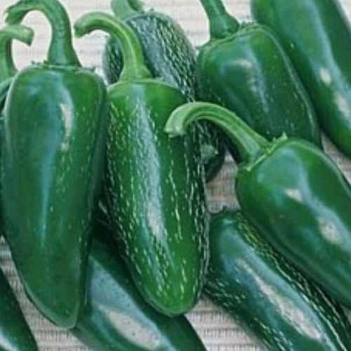 Pepper 'Jalapeno'