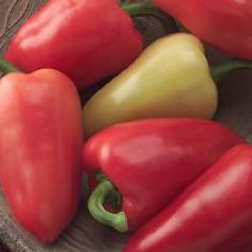 Pepper 'Mariachi'